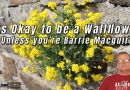 It's Okay to be a Wallflower – Unless you're Barrie Macguire